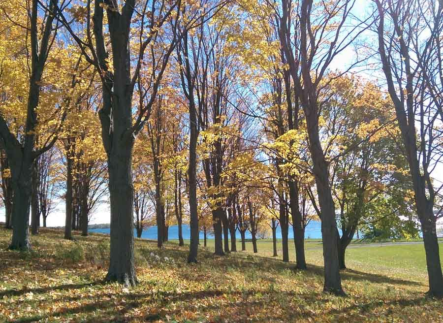 View of tree & St. Lawrence River at Upper Canada Village during multi-day bike tour to Cornwall by Escape tours rentals